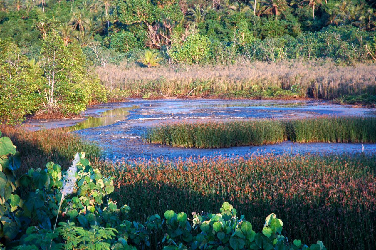 Guam Marsh