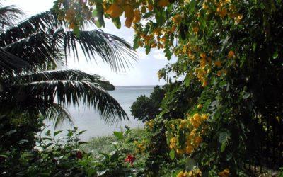 Peeking Through Guam Jungle